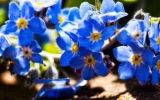 Цветик-семицветик: какие цвета сочетаются на клумбе?