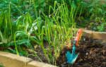 Какие растительные остатки я никогда не выбрасываю и использую их для удобрения и своих теплых грядок, а какие однозначно идут в мусор