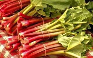 Как вырастить ревень из семян: вкусно и полезно!