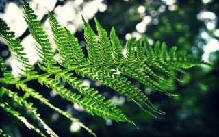Выращивание тенелюбивых растений на участке