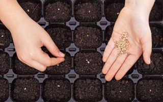 Посев мелких семян: несколько надежных способов