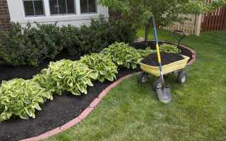 Хоста как удачное дизайнерское решение в саду
