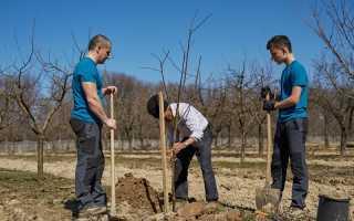 10 простых правил посадки плодовых деревьев