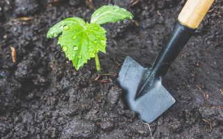 Африканские хитрости и шпалеры: как собрать богатый урожай огурцов с маленькой грядки?