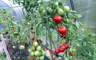 Для чего нужно подвязывать помидоры?