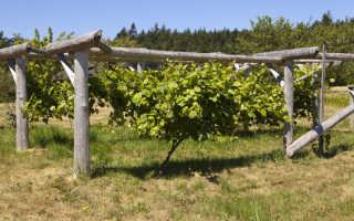 В каких случаях допустимо пересаживать виноград