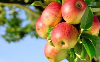 Чем болеют яблони: как распознать и вылечить