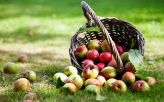 Популярные позднеспелые сорта яблок