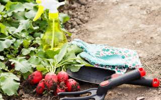 Как вырастить отменный урожай редиса