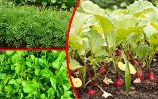 Июльские работы на огороде: что сеем и сажаем?