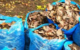 Опавшие листья – польза для чеснока