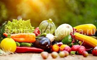 Полезные советы от огородников для большого урожая