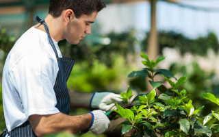 Советы и рекомендации по уходу за садом