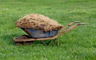 Как правильно удобрять растения навозом