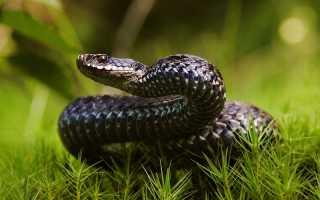 Избавляемся от змей на участке: способы