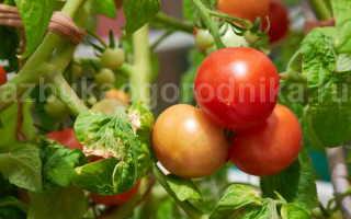 Чтоб томаты быстрее краснели