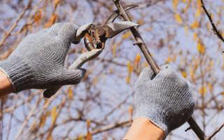 Самое лучшее время для обрезки плодовых деревьев