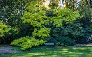 Как правильно убрать корни деревьев на дачном участке