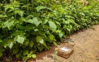 Мульчирование малины весной: уход за корнями