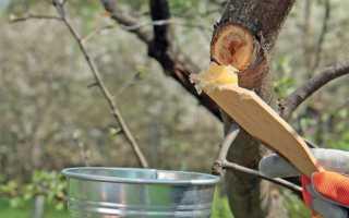 Как сделать садовый вар и замазку в домашних условиях
