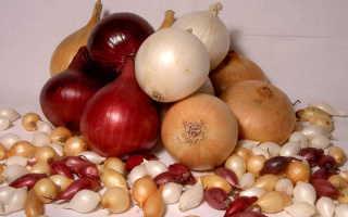 Как подготовить лук-севок к выращиванию в открытом грунте