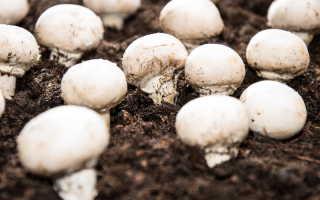 Самостоятельное приготовление компоста для выращивания шампиньонов