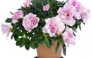 8 растений, которые стоят в домах успешных и богатых людей