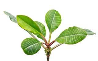 Растения, которые из декоративных могут стать сорняками