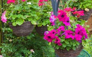 Сад в контейнерах: лучшие цветы для выращивания в вазонах и подвесных кашпо