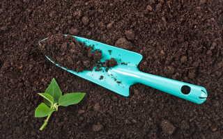 Почва: микроорганизмы, удобрения, кислотность