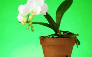 Правила, соблюдение которых не допустит гибели орхидеи