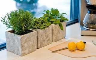 Что можно выращивать дома зимой
