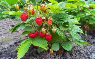 Обработка сада и огорода от болезней и вредителей