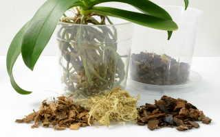 Пересаживаем орхидеи: подробное описание процесса