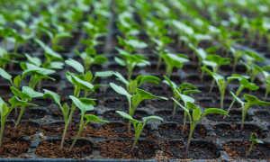 Семена для посадки