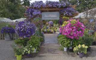 Что посадить у беседки: советы садоводам