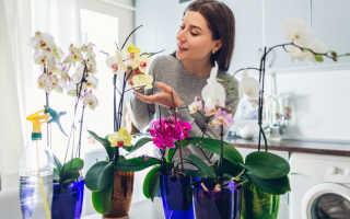 Перекись водорода для орхидей не только лечение, но и преданный помощник на всех этапах развития