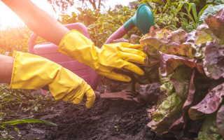 Растения, выращивание которых по соседству приведет к гибели одного из них