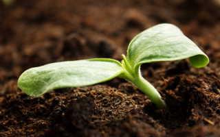 Как избавиться от кислой почвы на участке