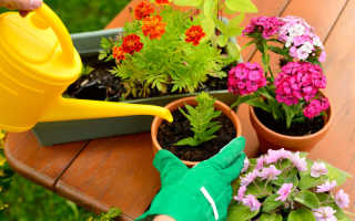 Как уберечь комнатные растения от цветочной мошки с помощью обыкновенных спичек