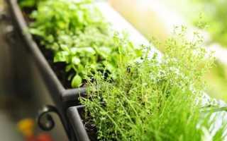 Микрозелень — выращиваем витамины на собственном подоконнике