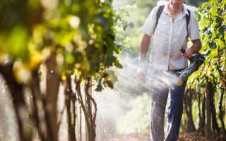 Схема осенней обрезки винограда для новичков