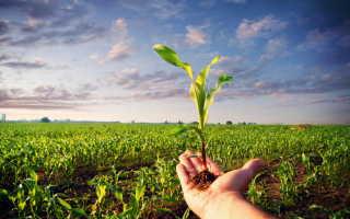 Выбираем здоровые растения для посадки