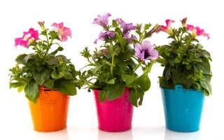 Домашние удобрения для ваших комнатных цветов