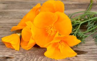 Примеры цветочных культур для подзимнего посева: семь однолетников