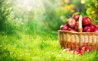 Правильный полив — залог хорошего урожая