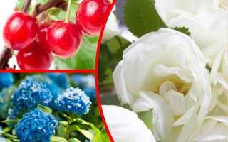 Какими кустами украсить сад