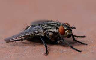 Эффективные методы борьбы с домашними мухами