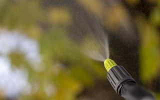 Осенняя искореняющая обработка сада — решительный удар по болезням и вредителям