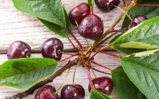 Черешня Аннушка – сладкий и сочный десерт на вашем столе